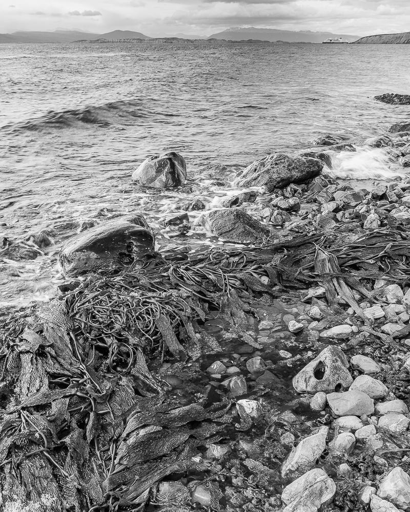 Photograph: Shoreline